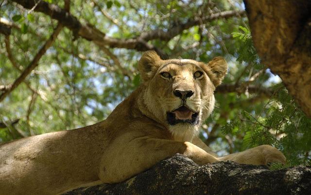 lvice na stromě